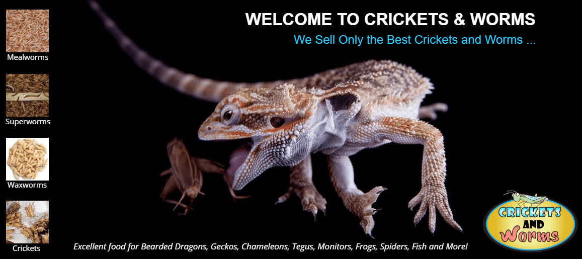 Crickets and Worms For Sale - Quality Feeders, Live Crickets